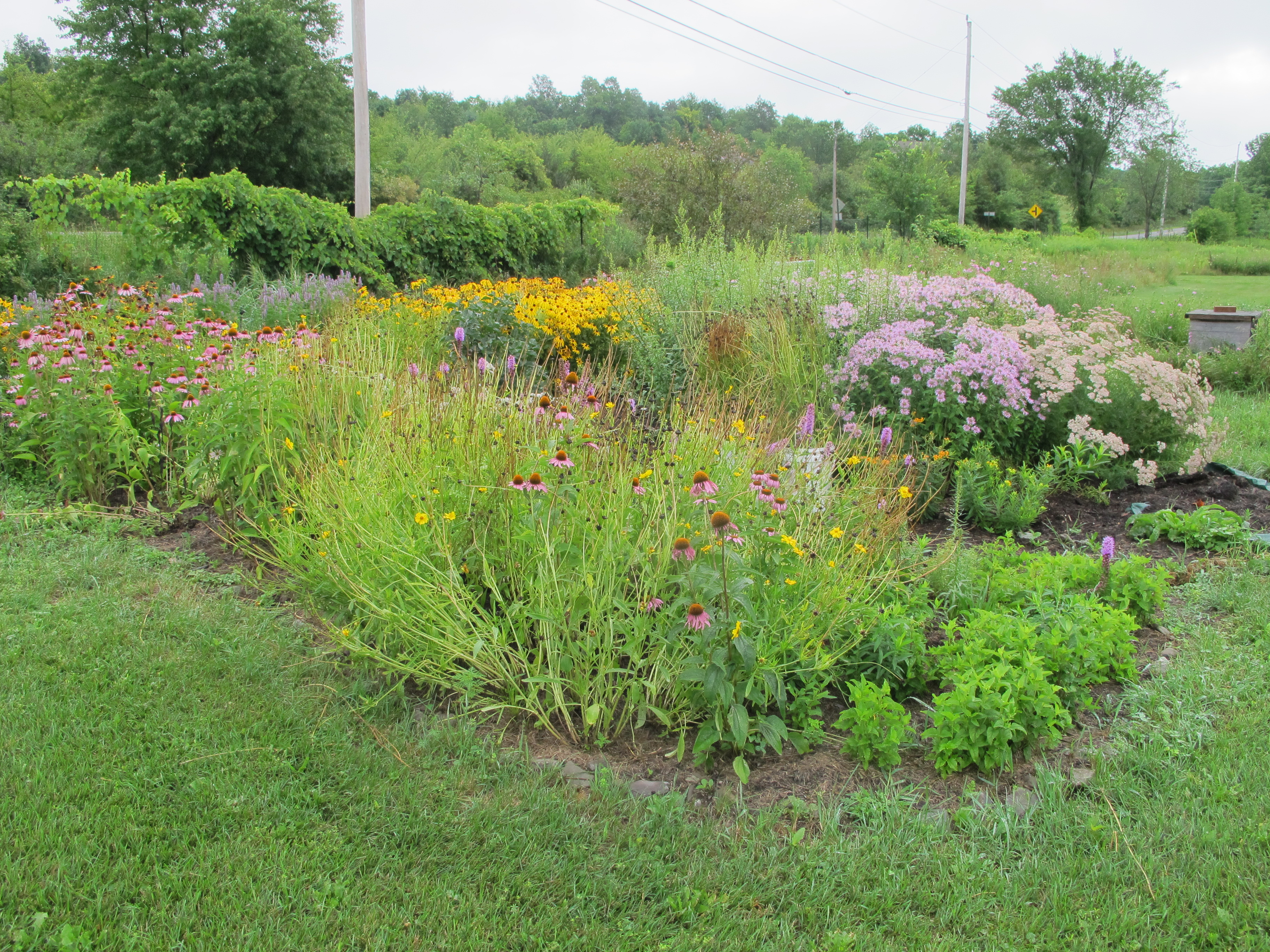 view of the entire pollinator patch full of colorful flowers