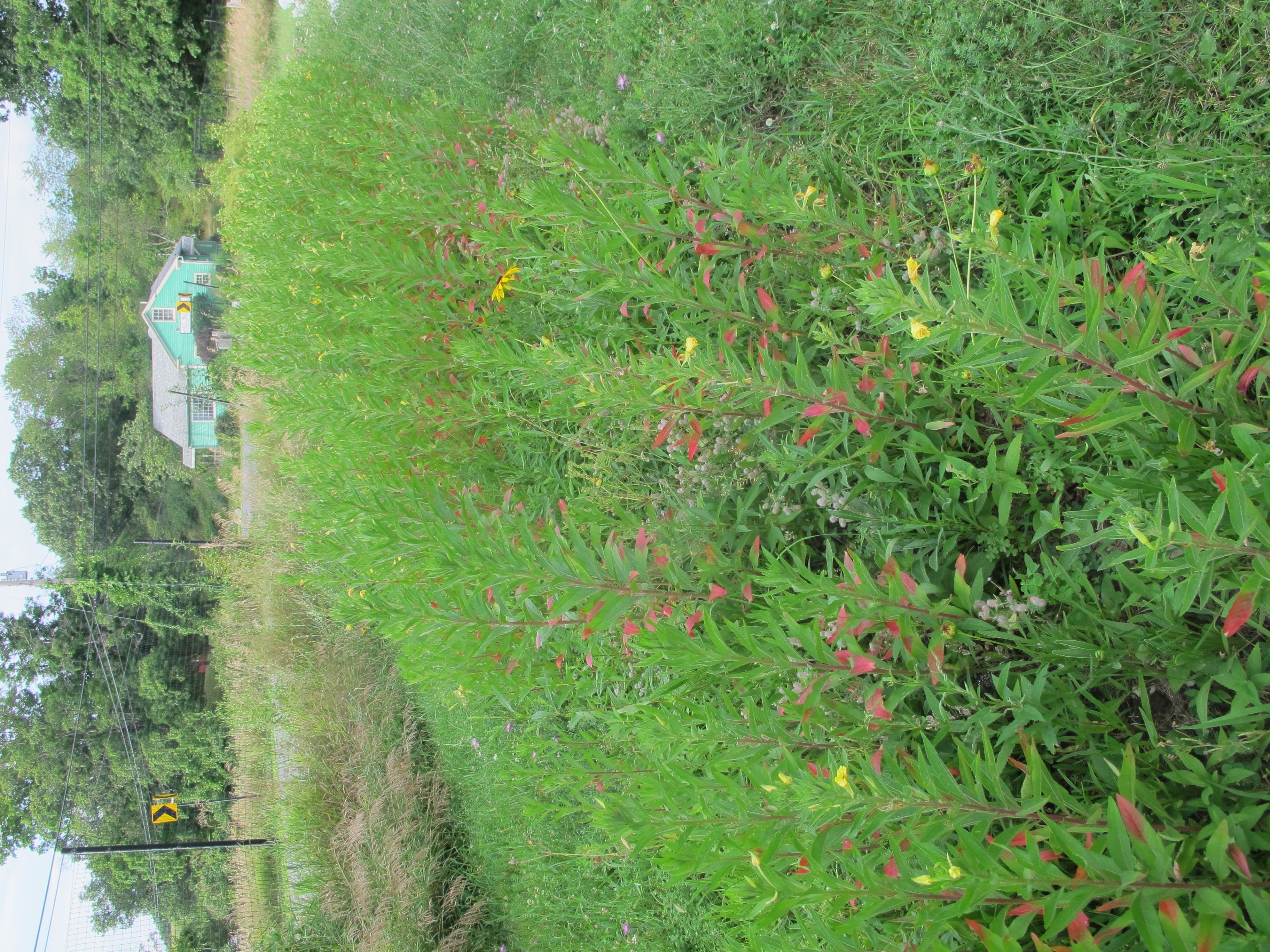 lush green plants have filled in the strip of soil