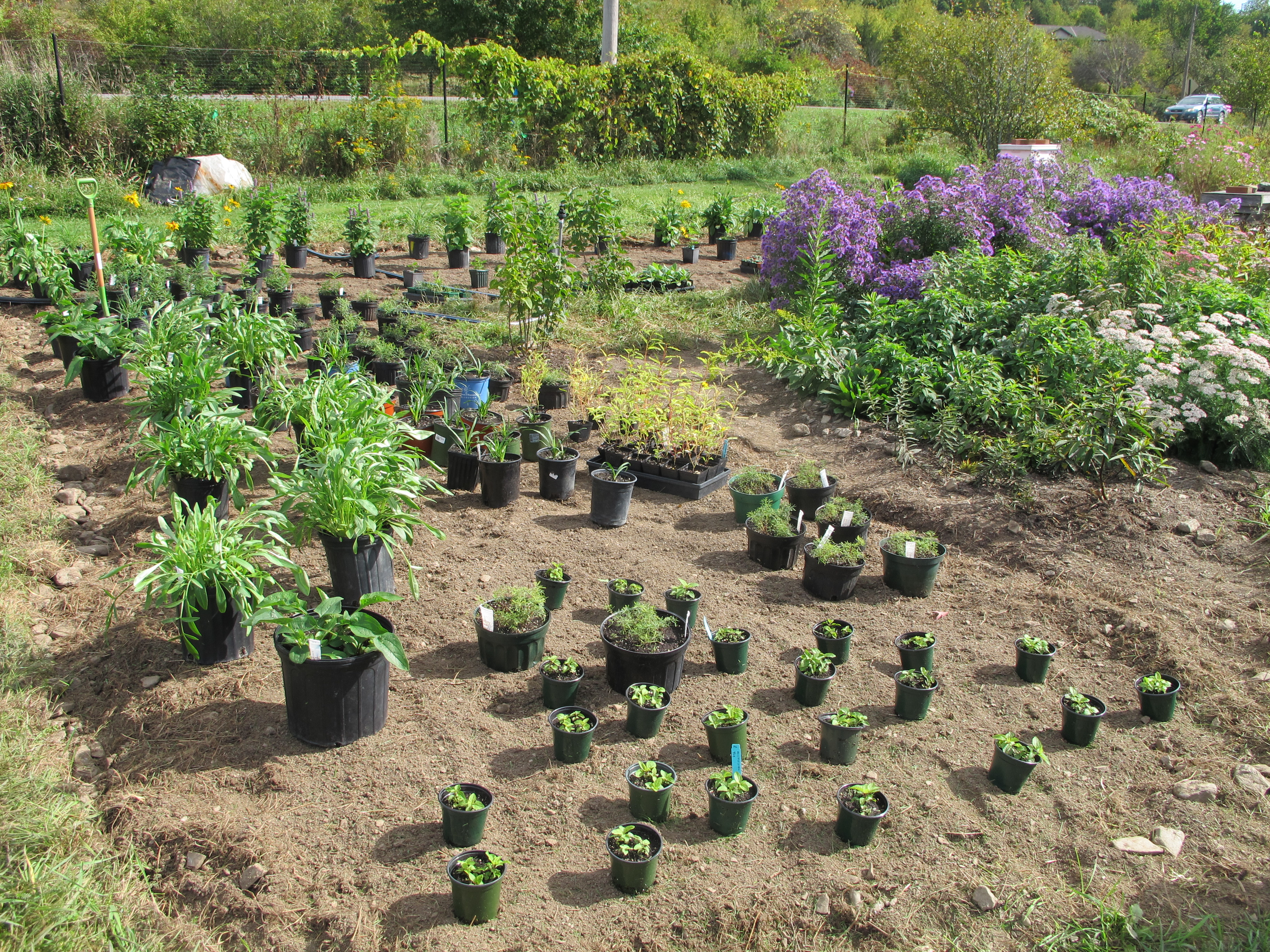potted plants are spaced out on the bare soil and ready to be planted