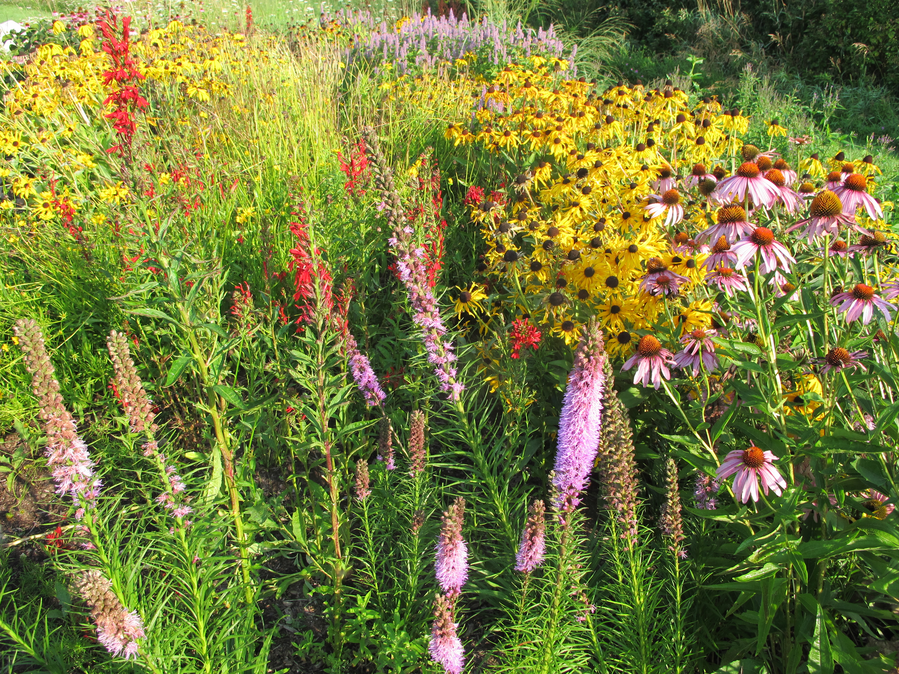 a mix of red, yellow, pink and purple flowers