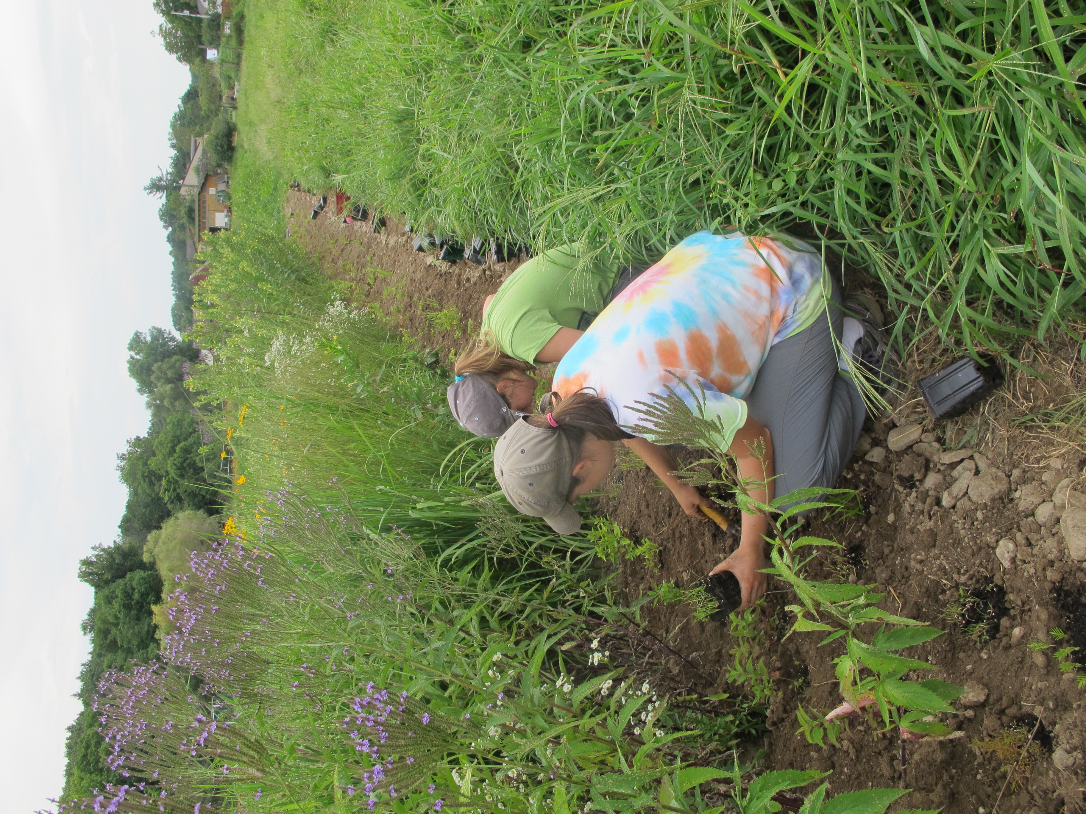 Interns help to plant flowers and grasses