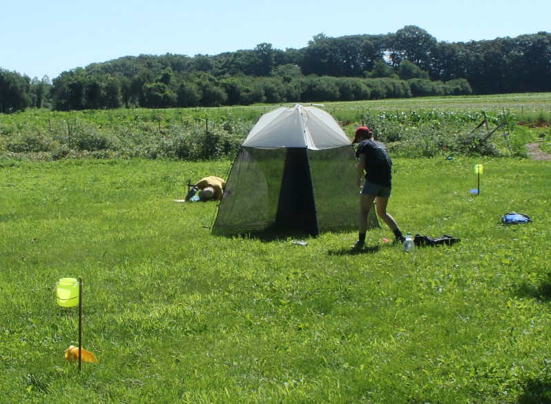 Insect Monitoring
