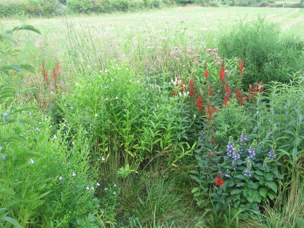 Rain Garden at Creekhouse