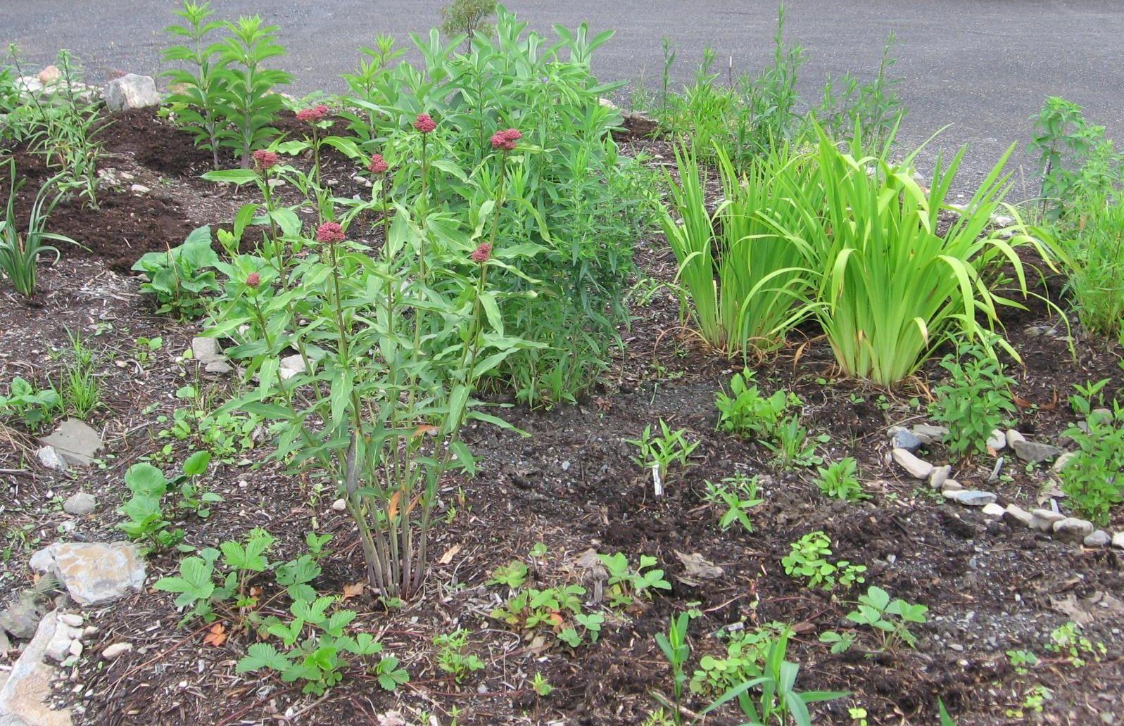 Roadside Garden in June 2011