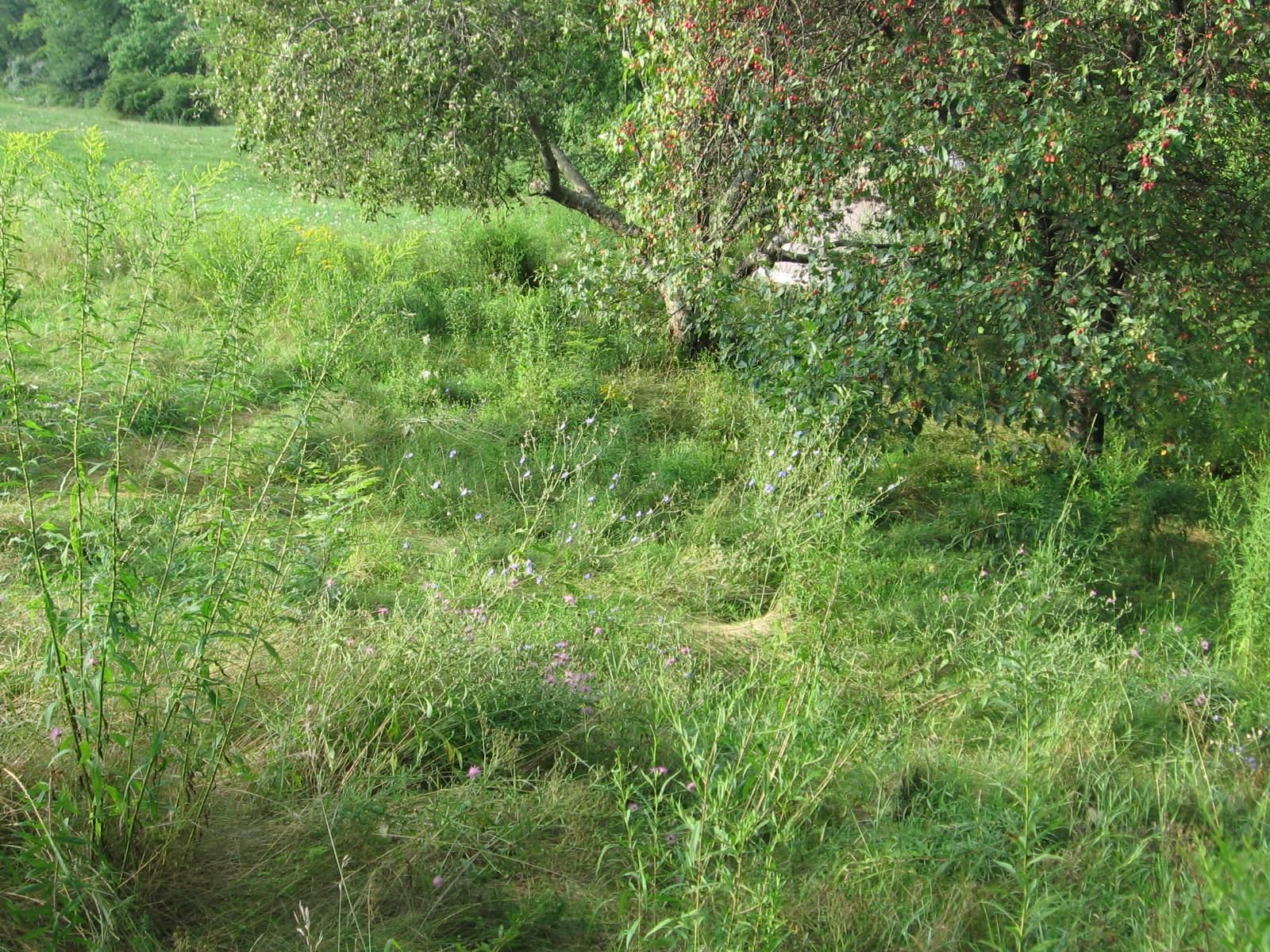 Wildflower Meadow in Aug 2011