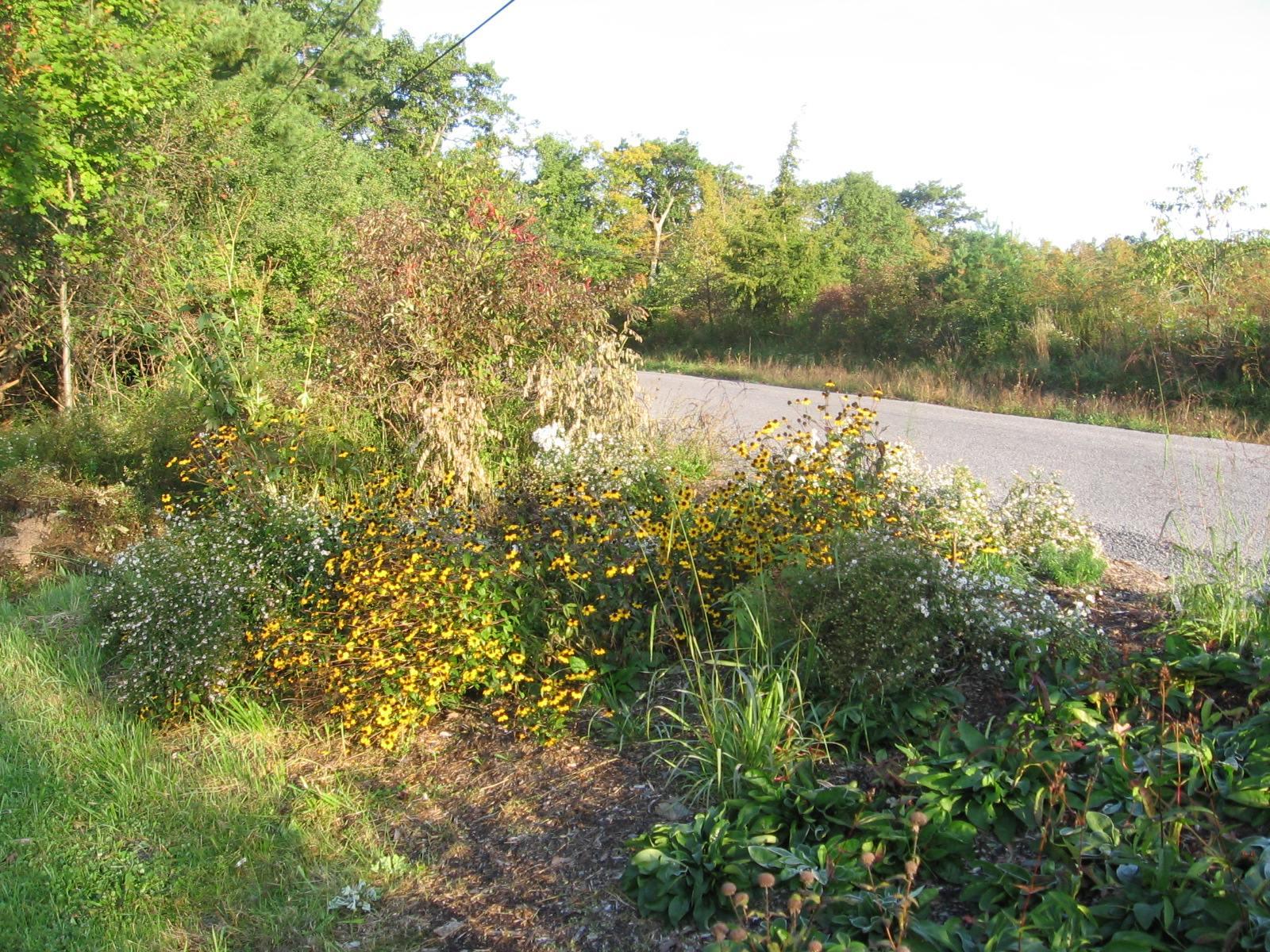 Roadside Garden in Oct. 2011