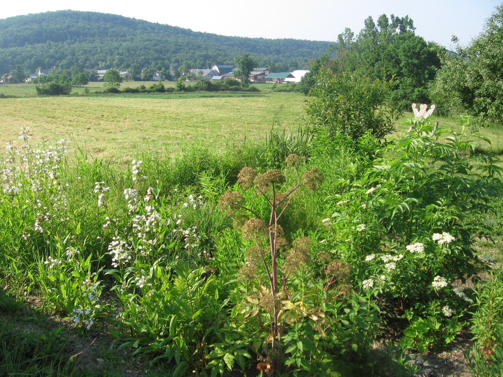 Raingarden in June 2012