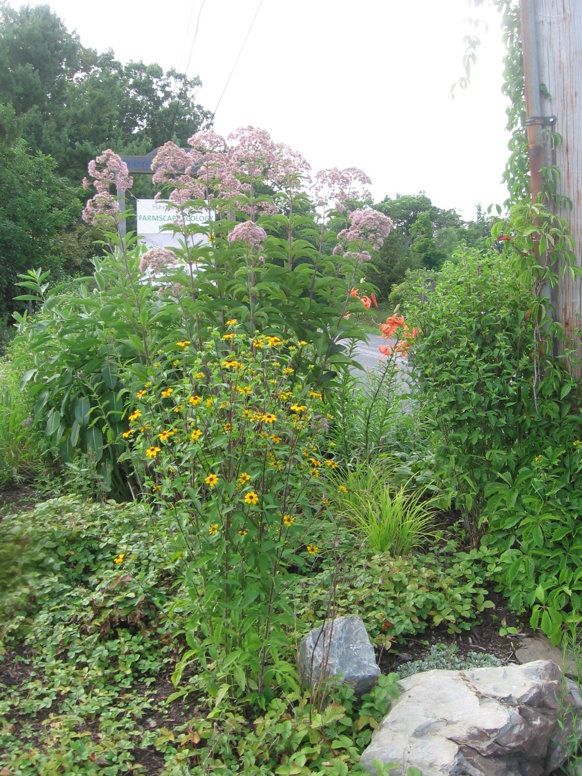 Roadside Garden in July 2012