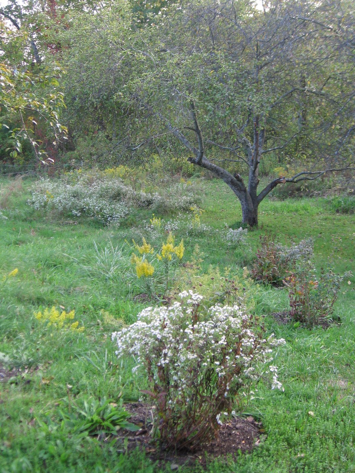 Wildflower Meadow in September 2012
