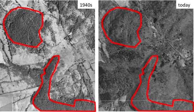 Aerial Photos of Forest in the 1940s and Today