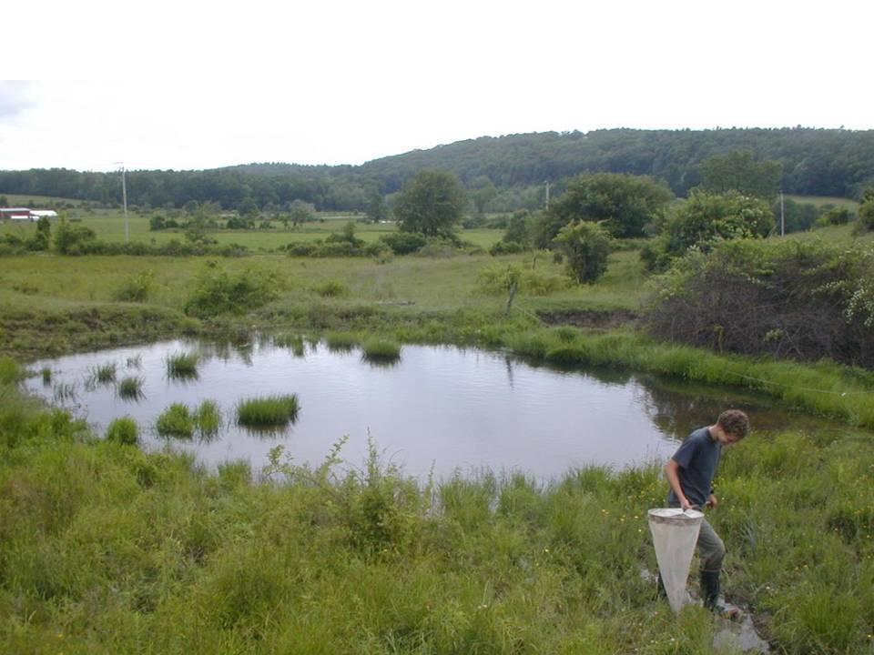 Man made ponds farmscape ecology program for Small natural pond