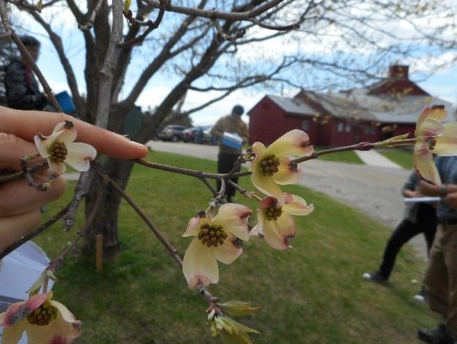 Spring Observations